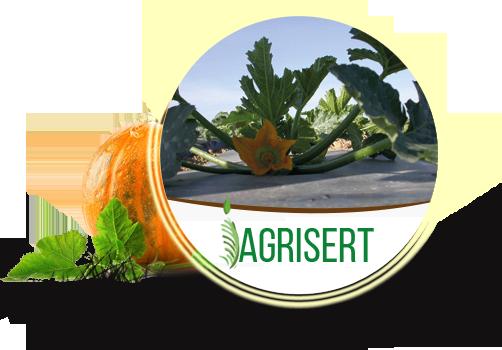 Agrisert sprl - Producteur fruits et légumes