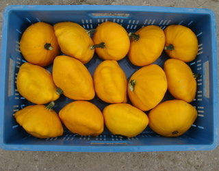 Agrisert sprl - Courges